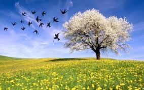 Illusione di primavera