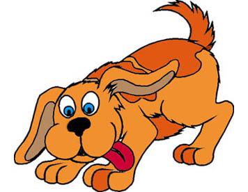 assicurazione-cane