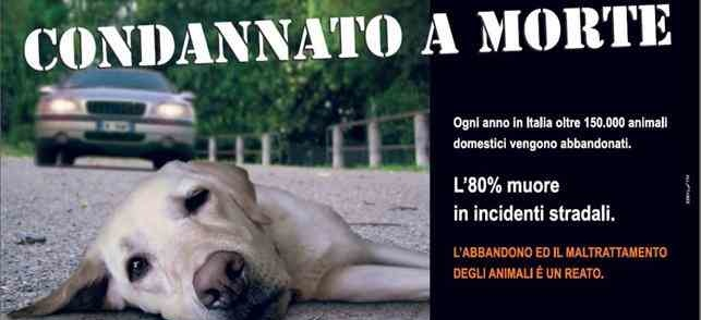 Abbandonare un animale è un crimine